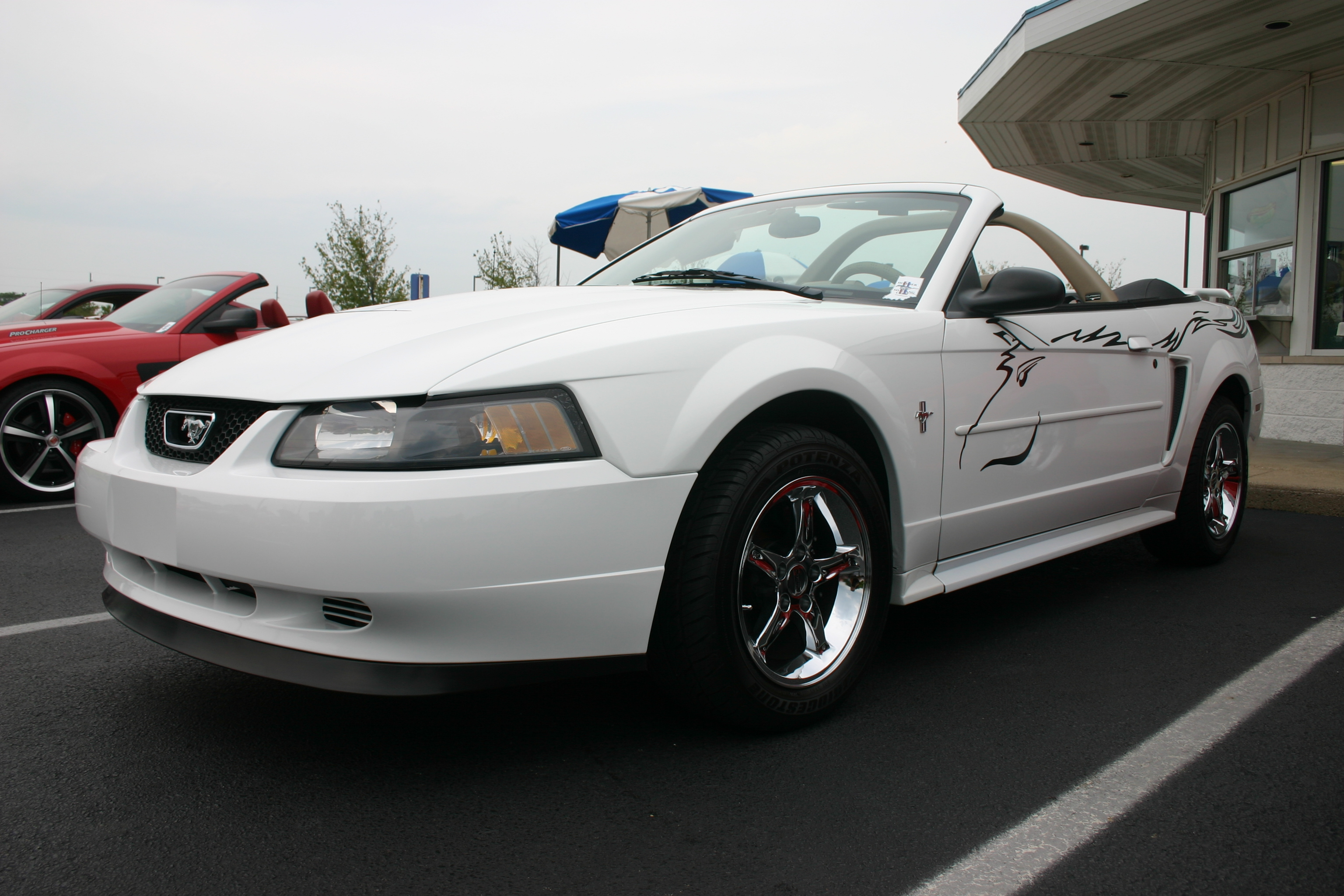 Members cars hoosier mustang club dave sell chuck stormy butlers white 2003 v6 mustang convertible sciox Images